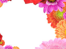 Flower frame. Frame with different colorful flowers on white background Stock Images