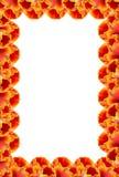 Flower frame. Tulip frame stock illustration