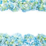Flower frame of blue hydrangea flowers on white background. Flat lay, top view. Floral background. Flower frame of blue hydrangea flowers on white background stock images