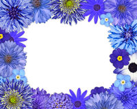 Flower Frame with Blue, Purple Flowers on White Stock Photos