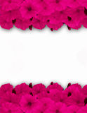 Flower frame, border. Bouquet of pink poppy on white background. Royalty Free Stock Photography