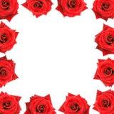 Flower frame border red velvet roses with dew drop Royalty Free Stock Photo