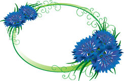 Flower frame. Bouquet cornflower isolated. Stock Photos