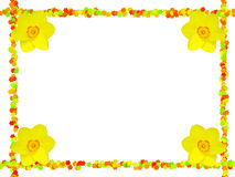 Flower Frame With Daffodils Stock Images