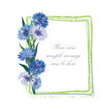 Flower frame. Floral border. Bouquet cornflower isolated. Stock Photo