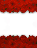 Flower frame. Floral border. Bouquet of red poppy. Royalty Free Stock Photos