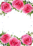 Flower frame flowers pink Rose leaves beautiful lovely spring su Stock Images
