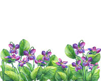 Flower frame of the Fragrant violets English Sweet Violets, Viola odorata. Hand drawn watercolor painting on white background Stock Images