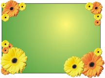 Flower frame. With gerberas on the green background Stock Photo