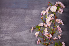 Flower frame on gray shabby chic background. Springtime blooming. Pink spring flowers. Top view with copy space. Stock Images