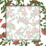 Flower frame Illustration Royalty Free Stock Images
