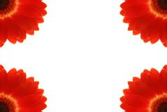 Flower frame, isolate on white. Red gerbera frame on white Stock Photos
