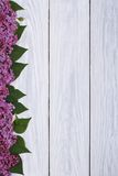 Flower frame of lilac Stock Image