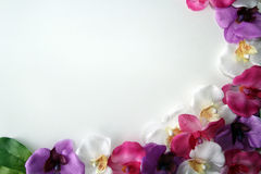 Flower frame. Orchid flower frame on a white boarder royalty free stock photos