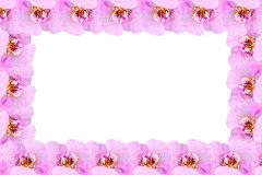Flower frame from orchids Stock Image