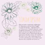 Flower frame, ornament. Camomile drawing. Vector Stock Photo