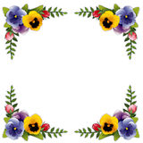 Flower Frame, Pansies and Roses Stock Photos