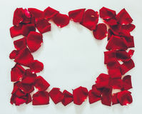 Flower frame petals of red roses on a white background Royalty Free Stock Images