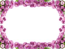 Flower frame. Pink purple flower frame isolated royalty free stock photos