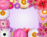 Flower Frame Pink, Purple, Red Flowers Royalty Free Stock Photos