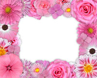 Flower Frame Pink, Purple Flowers on White Stock Images
