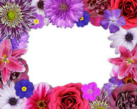 Flower Frame Pink, Purple, Red Flowers on White Stock Photos