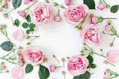 Flower frame with pink roses, buds and leaves on white background. Flat lay, top view. Spring frame background. Flower frame with pink roses, buds and leaves on stock photography