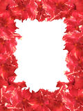 Flower frame red hibiscus. Res hibiscus frame on a white background Stock Photos