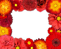 Flower Frame with Red Flowers on Blank Background Royalty Free Stock Images