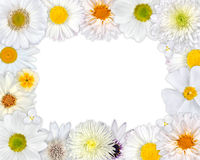 Flower Frame with White Flowers on Blank Background Stock Photos