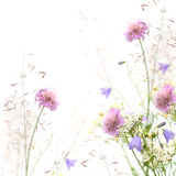 Flower frame - spring or summer background Stock Images