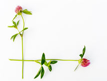 Flower framework Royalty Free Stock Photo