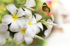 Flower frangible and butterfly Royalty Free Stock Image