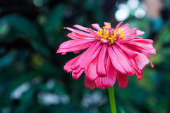 Flower. Fresh flower with blur background. Focus only towards it royalty free stock photography