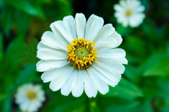 Flower. Fresh flower with green background stock images