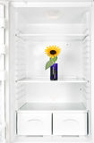 Flower in the fridge Royalty Free Stock Image
