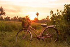 Flower on front of Bicycle at sunset beautiful landscape Stock Photos