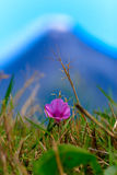Flower in front of a Volcano Smoking Royalty Free Stock Photo