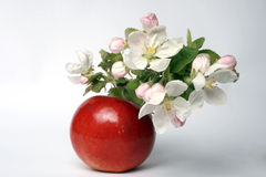 Flower and fruit Royalty Free Stock Image