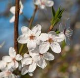 Flower in the fruit tree Stock Photo