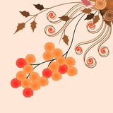 Flower and Fruits Vector  Royalty Free Stock Image