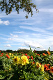 Flower garden. Bed of flowers on lake shore Royalty Free Stock Photography