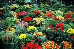Flower Garden. Display of flowers in Botanical Garden royalty free stock photos