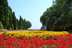 Flower garden. Garden of red and yellow flowers Royalty Free Stock Image