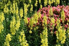 Flower Garden. North of Thailand Stock Photo