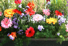 Flower garden Royalty Free Stock Images
