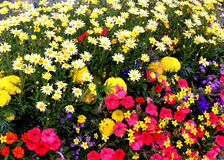 Flower garden. Flowers Stock Photos