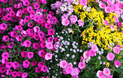 Flower garden. Flowers Royalty Free Stock Photo