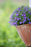 Flower garden. Closeup picture of flowers in a garden in spring in denmark stock photos