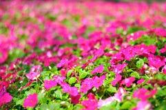 Flower in garden Stock Image
